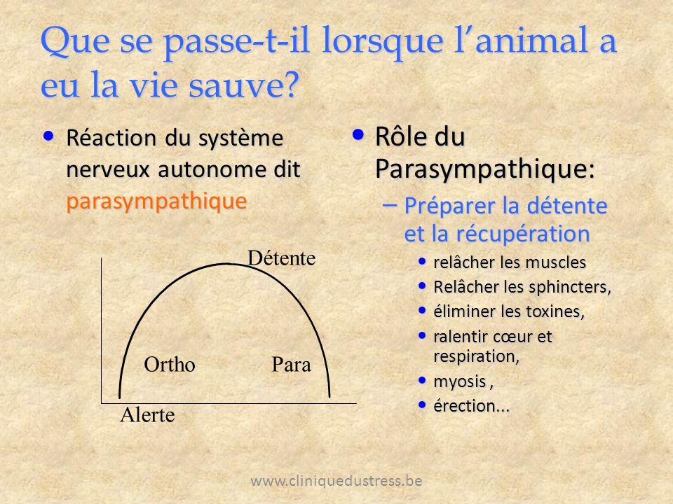 www.cliniquedustress.be Que se passe-t-il lorsque lanimal a eu la vie sauve? Réaction du système nerveux autonome dit parasympathique Réaction du syst