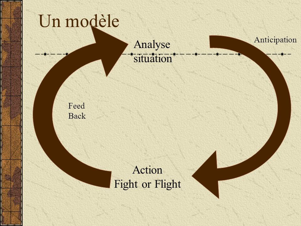Un modèle Feed Back Analyse situation Action Fight or Flight Anticipation
