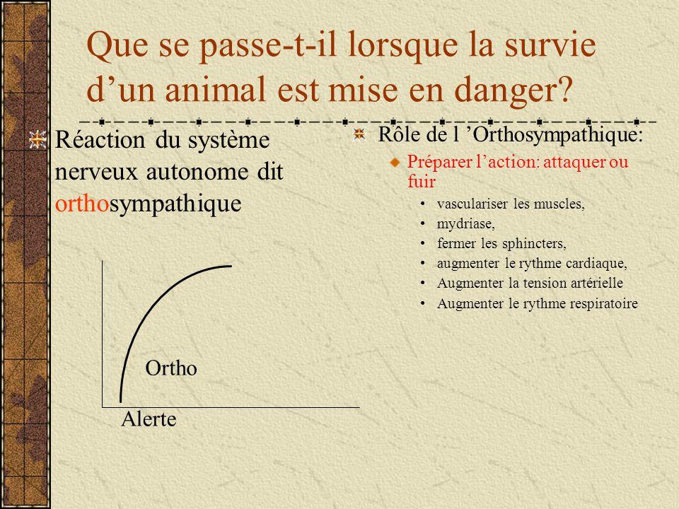 Que se passe-t-il lorsque la survie dun animal est mise en danger? Réaction du système nerveux autonome dit orthosympathique Rôle de l Orthosympathiqu