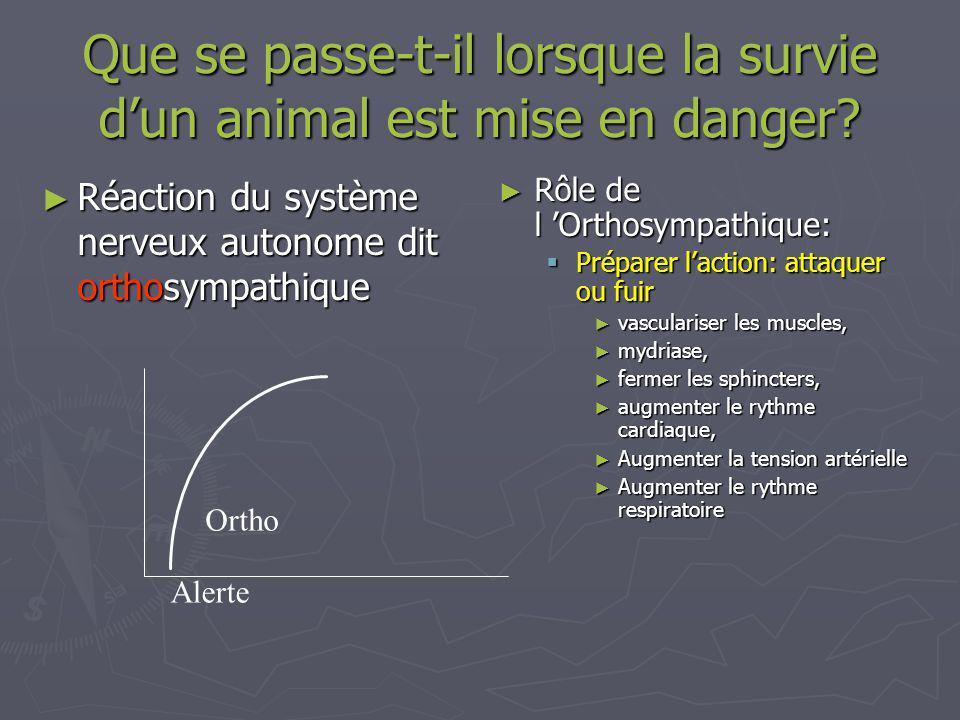 Que se passe-t-il lorsque la survie dun animal est mise en danger.