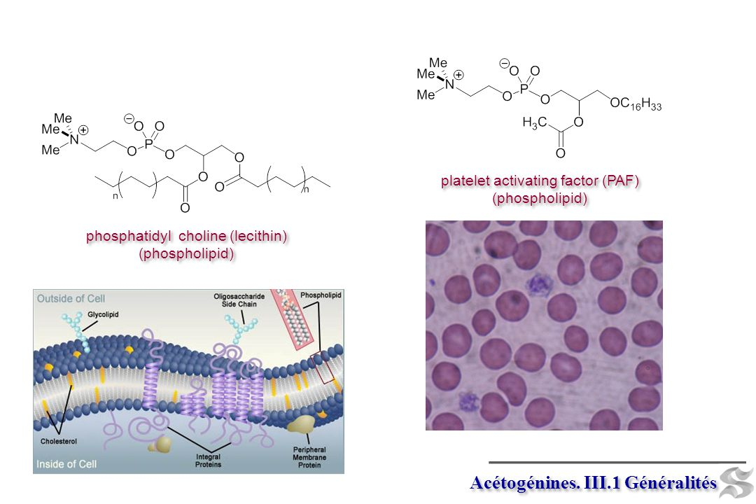 -e (Fe +3 ) -H+ -e -H+ -e Genistein (Isoflavone) Genistein (Isoflavone) Base chalcone Acétogénines.