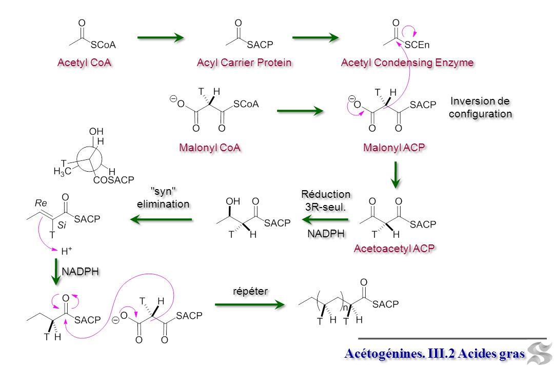 HCO 3 – + ATP CO 2 + ATP Biotin (vitamine B 7 ) Biotin (vitamine B 7 ) N1-Carboxyl biotin (Enzyme-bound) Malonyl CoA Acétogénines.