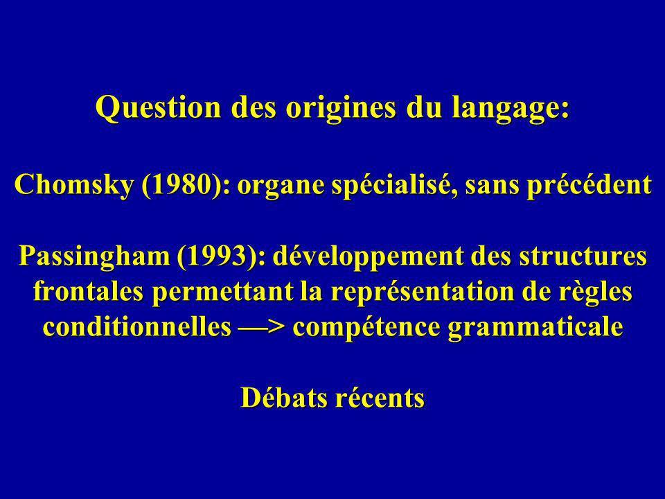 Question des origines du langage: Chomsky (1980): organe spécialisé, sans précédent Passingham (1993): développement des structures frontales permettant la représentation de règles conditionnelles > compétence grammaticale Débats récents