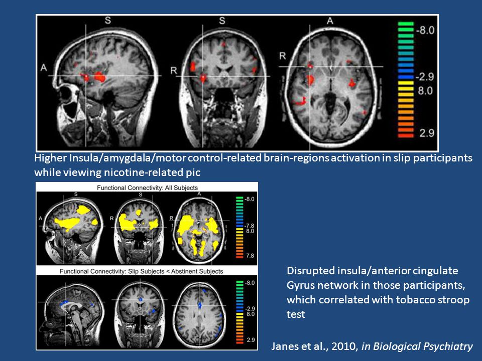 Disrupted insula/anterior cingulate Gyrus network in those participants, which correlated with tobacco stroop test Higher Insula/amygdala/motor control-related brain-regions activation in slip participants while viewing nicotine-related pic