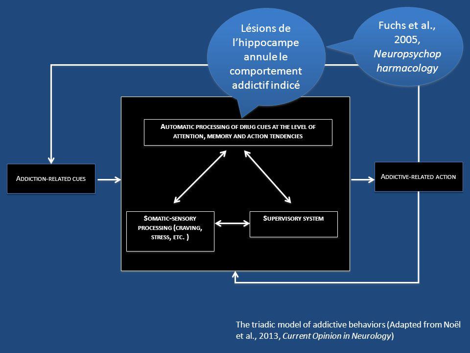 En aigu, la nicotine améliore le fonctionnement de lhippocampe: associations liées au tabac très puissantes En chronique, pas deffet sur lhippocampe (tolérance) En état de manque, diminution deffectivité de lhippocampe: entrave à la formation de nouvelles associations (p.