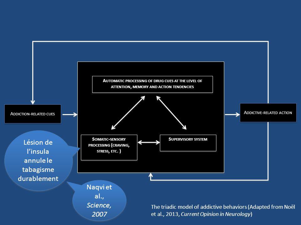 Influence du genre: les femmes sont plus réactifs aux informations tabac (voir les travaux de Perkins KA, 1999-2001 et aussi Field, Duka, 2004, in Pharmacol Biochem Behav) Ehrman et al., 2002, in Drug and Alcohol Dependence