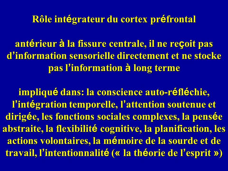 Rôle int é grateur du cortex pr é frontal ant é rieur à la fissure centrale, il ne re ç oit pas d information sensorielle directement et ne stocke pas l information à long terme impliqu é dans: la conscience auto-r é fl é chie, l int é gration temporelle, l attention soutenue et dirig é e, les fonctions sociales complexes, la pens é e abstraite, la flexibilit é cognitive, la planification, les actions volontaires, la m é moire de la sourde et de travail, l intentionnalit é ( « la th é orie de l esprit » )