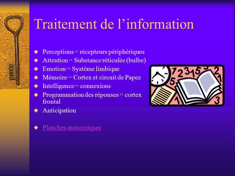 Traitement de linformation Perceptions = récepteurs périphériques Attention = Substance réticulée (bulbe) Emotion = Système limbique Mémoire = Cortex