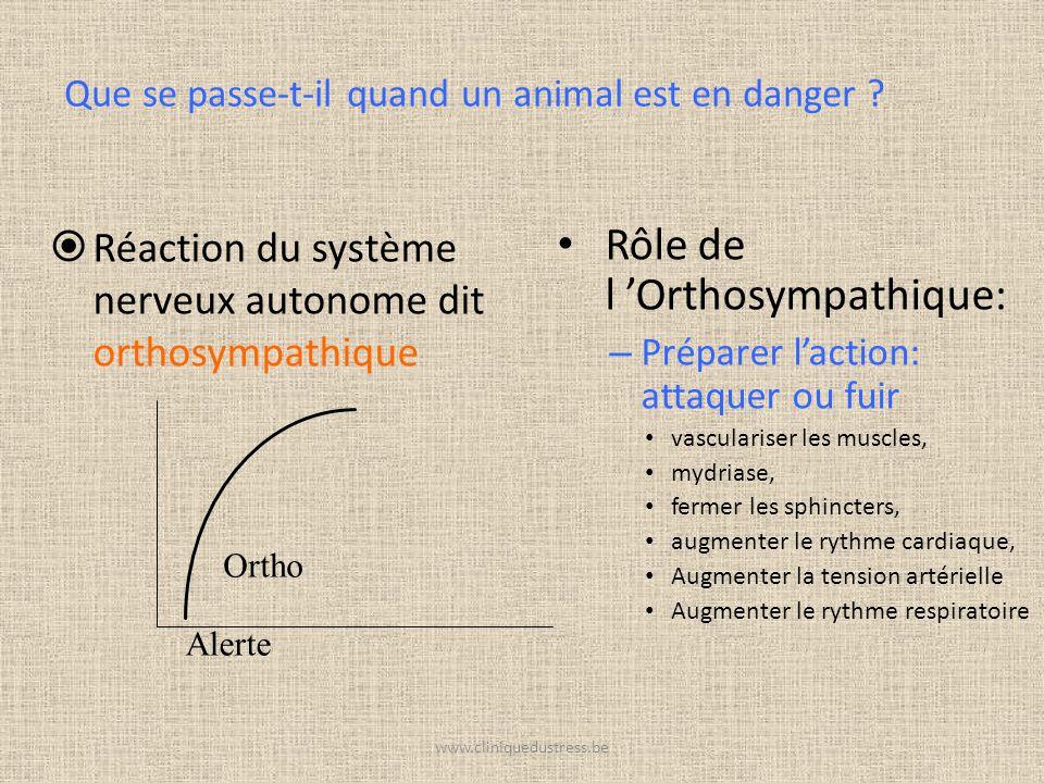 www.cliniquedustress.be Réaction du système nerveux autonome dit orthosympathique Rôle de l Orthosympathique: – Préparer laction: attaquer ou fuir vas