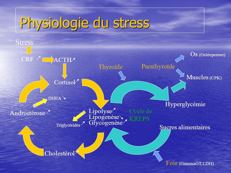 Physiologie du stress Lipolyse Lipogenèse Glycogenèse Cortisol Cholestérol Androstérone ACTH CRF Stress DHEA Cycle de KREPS Triglycérides Foie (GammaG