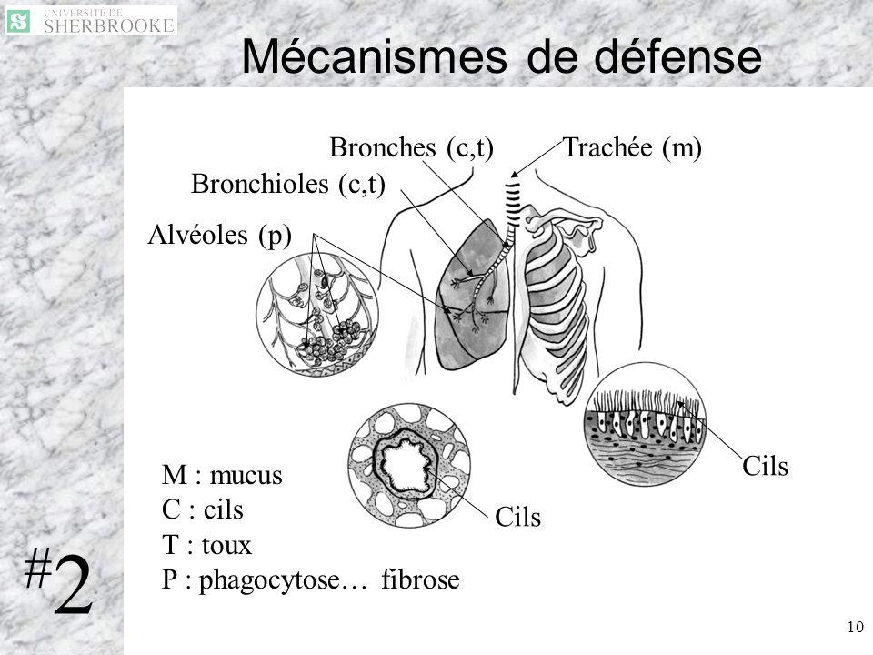 10 Mécanismes de défense Trachée (m)Bronches (c,t) Bronchioles (c,t) Alvéoles (p) Cils M : mucus C : cils T : toux P : phagocytose… fibrose #2#2