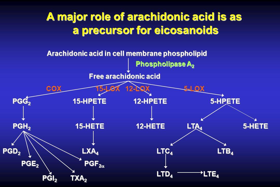 Arachidonic acid in cell membrane phospholipid Free arachidonic acid Phospholipase A 2 PGG 2 PGH 2 15-HPETE12-HPETE5-HPETE 15-HETE12-HETE LTA 4 5-HETE PGD 2 PGE 2 PGI 2 TXA 2 PGF 2 PGF 2 LXA 4 LTC 4 LTB 4 LTD 4 LTE 4 A major role of arachidonic acid is as a precursor for eicosanoids COX 15-LOX 12-LOX 5-LOX