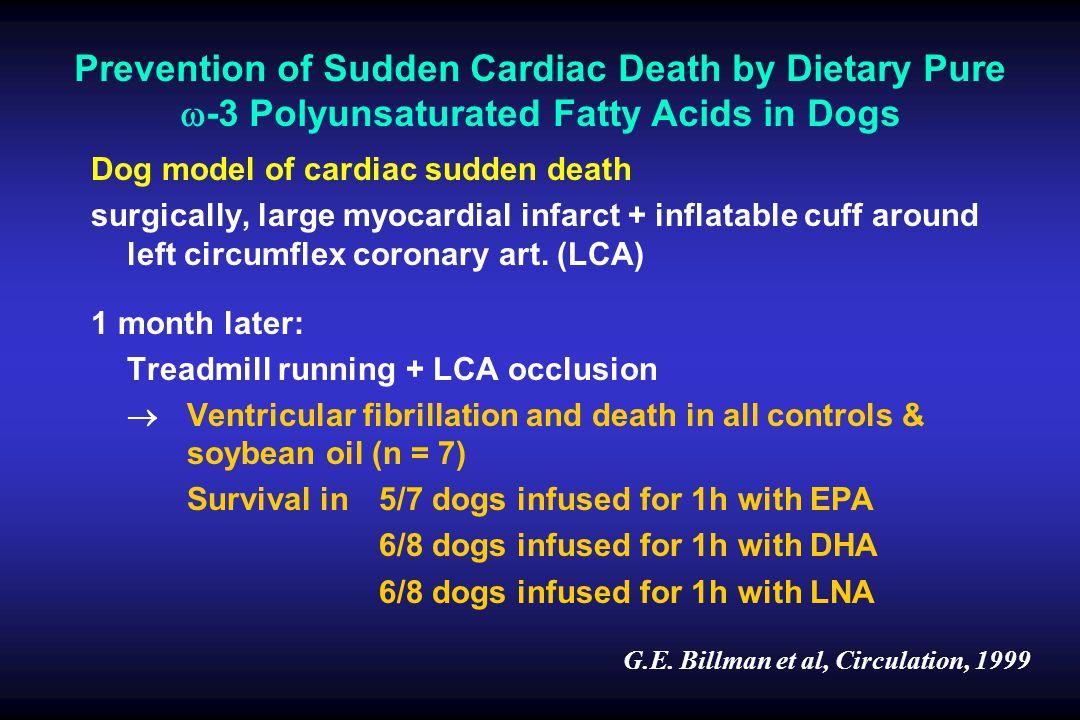 Dog model of cardiac sudden death surgically, large myocardial infarct + inflatable cuff around left circumflex coronary art.