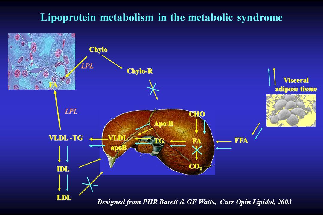 FFA FA FA CHO TG Apo B VLDL apoB VLDL -TG LPL FA IDL LDL Chylo-R Chylo Visceral adipose tissue Lipoprotein metabolism in the metabolic syndrome Designed from PHR Barett & GF Watts, Curr Opin Lipidol, 2003 LPL CO 2