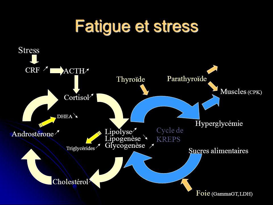 Fatigue et stress Lipolyse Lipogenèse Glycogenèse Cortisol Cholestérol Androstérone ACTH CRF Stress DHEA Cycle de KREPS Triglycérides Foie (GammaGT, L