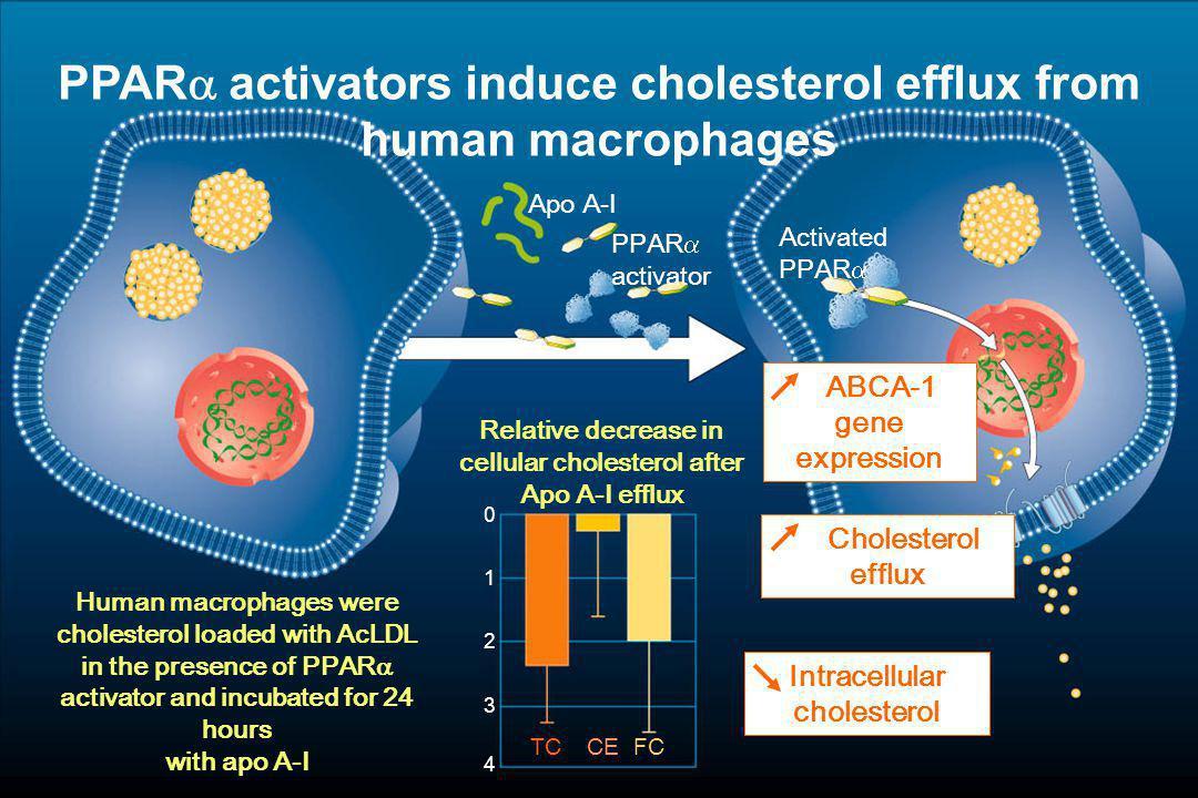 VA-HIT Study: Diabète type 2 & traitement par fibrate (1) (1)Bloomfield Rubins H et al.