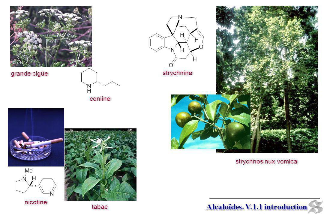 coniine grande cigüe nicotine strychnine strychnos nux vomica Alcaloïdes. V.1.1 introduction tabac