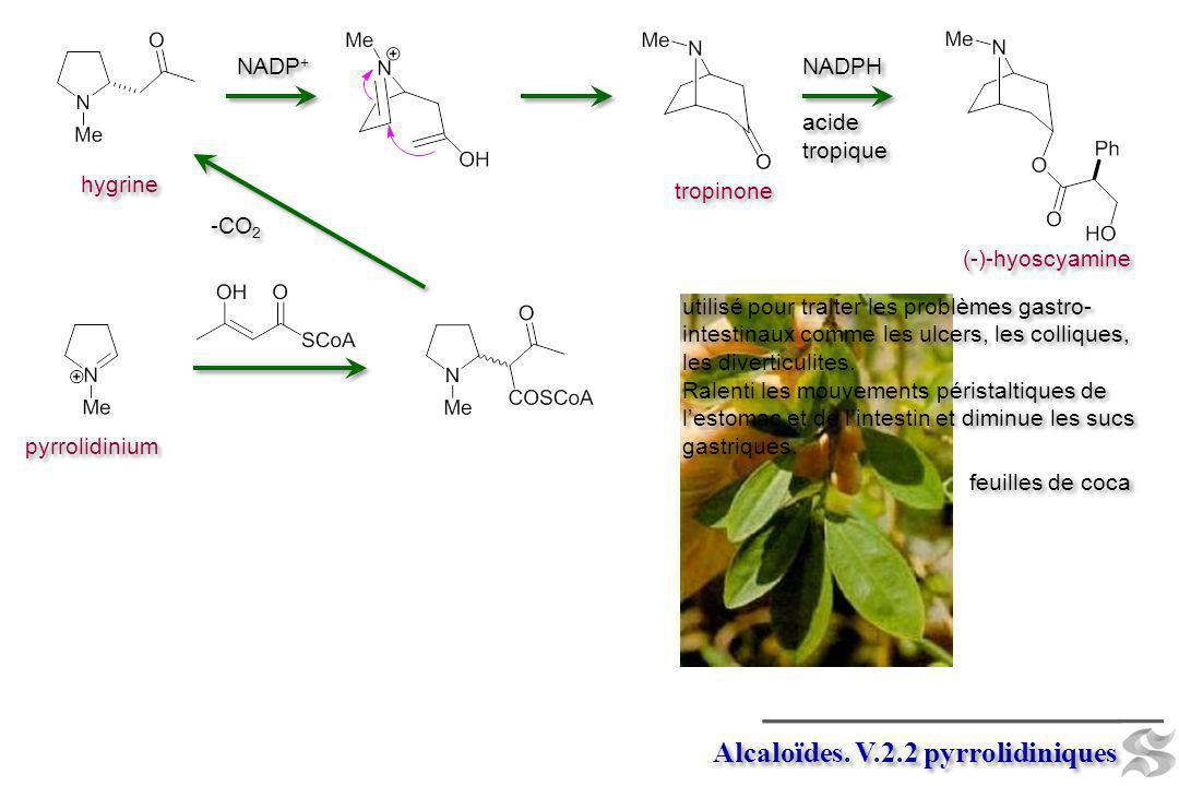 pyrrolidinium Alcaloïdes. V.2.2 pyrrolidiniques -CO 2 hygrine NADP + tropinone (-)-hyoscyamine NADPH acide tropique NADPH acide tropique feuilles de c