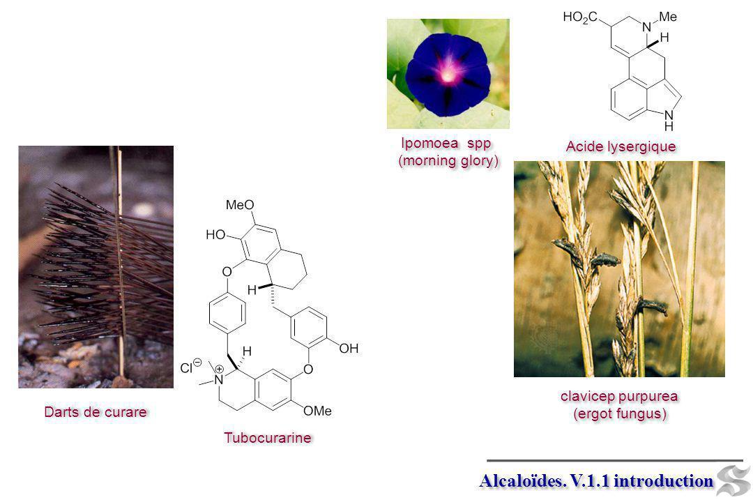 Darts de curare Tubocurarine Ipomoea spp (morning glory) Ipomoea spp (morning glory) Acide lysergique clavicep purpurea (ergot fungus) clavicep purpur