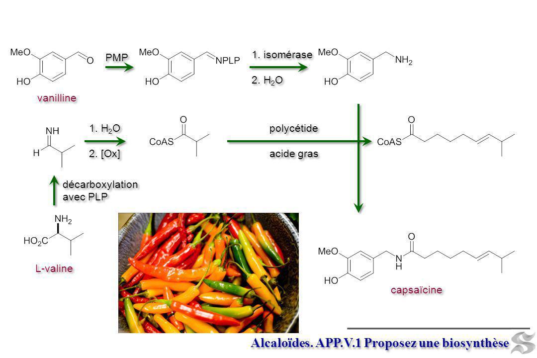 Alcaloïdes. APP.V.1 Proposez une biosynthèse capsaïcine L-valine PMP 1. isomérase 2. H 2 O 1. isomérase 2. H 2 O polycétide acide gras polycétide acid