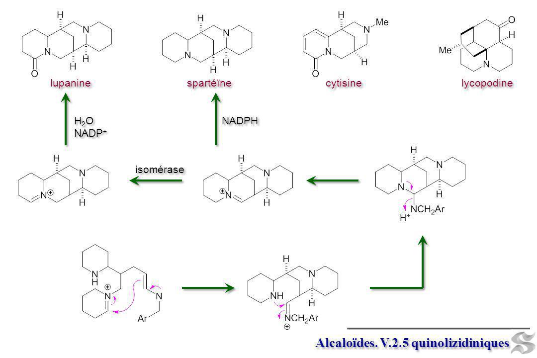 pipéridinium Alcaloïdes.V.2.5 quinolizidiniques 1.
