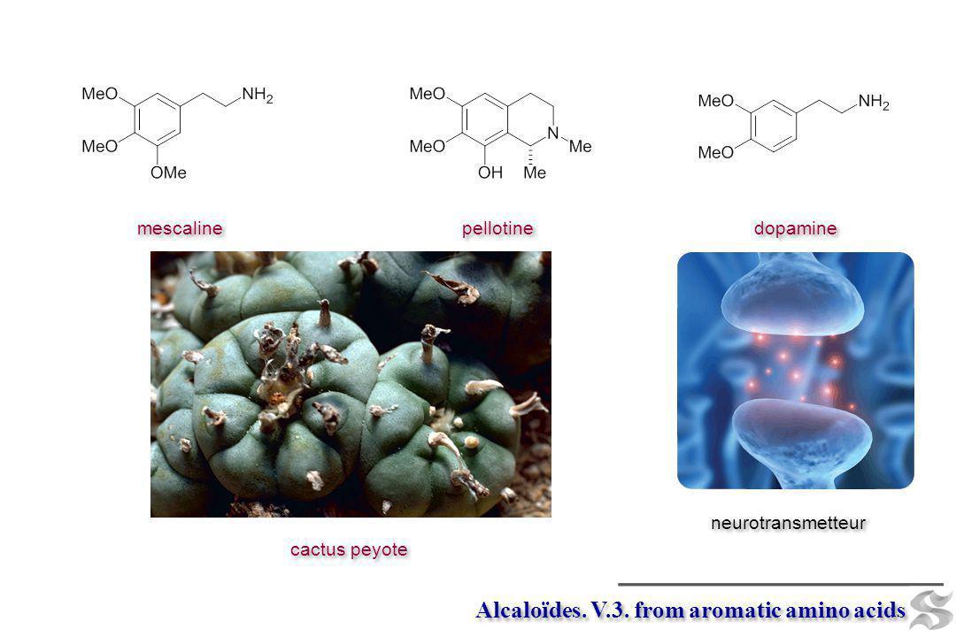 Alcaloïdes. V.3. from aromatic amino acids mescaline pellotine cactus peyote dopamine neurotransmetteur