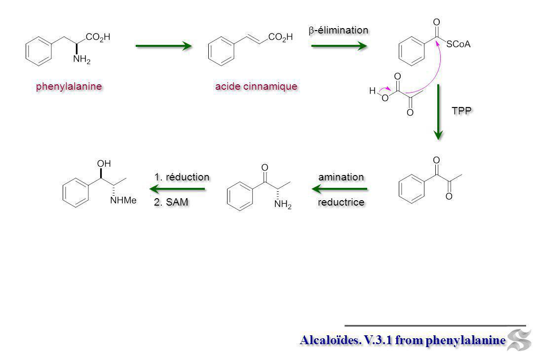 Alcaloïdes. V.3.1 from phenylalanine phenylalanine -élimination acide cinnamique amination reductrice amination reductrice 1. réduction 2. SAM 1. rédu