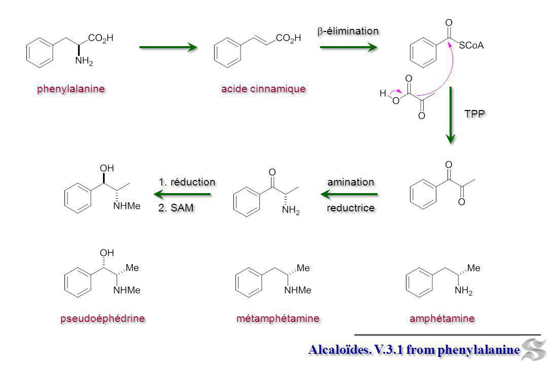 Alcaloïdes. V.3.1 from phenylalanine pseudoéphédrine métamphétamine amphétamine phenylalanine -élimination acide cinnamique amination reductrice amina