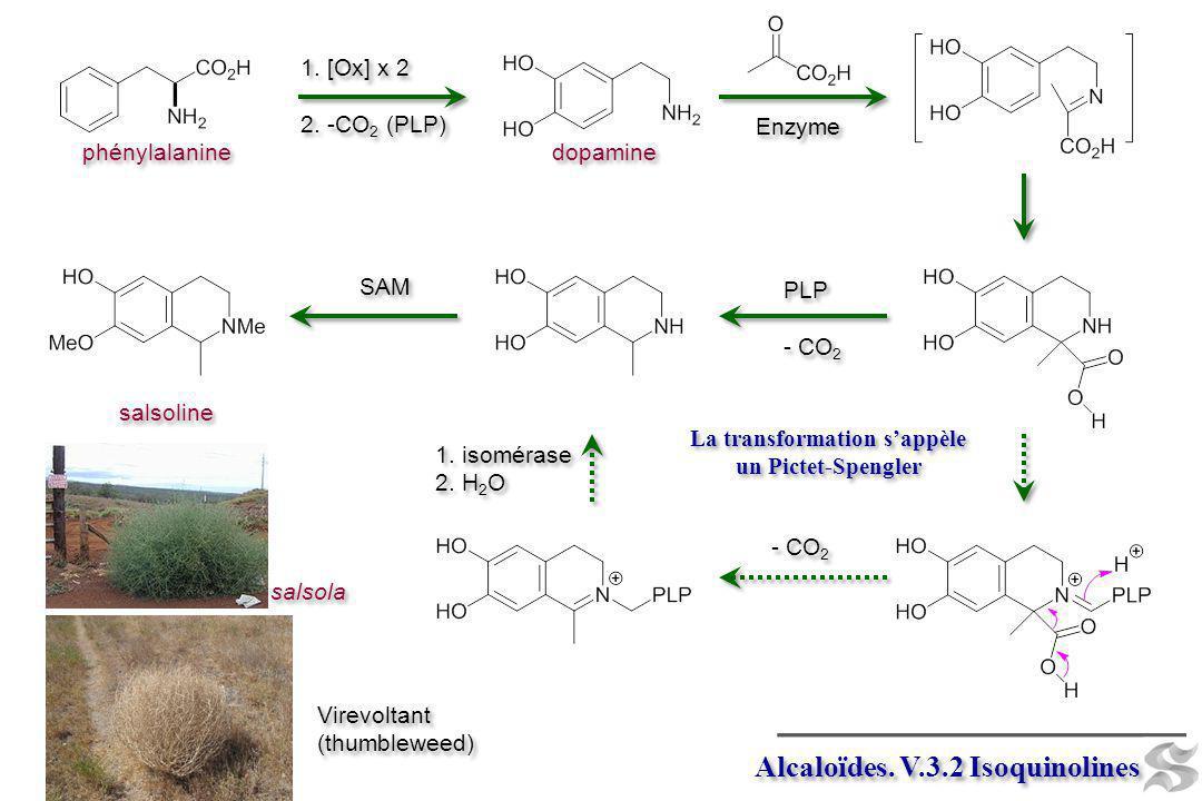 Alcaloïdes. V.3.2 Isoquinolines La transformation sappèle un Pictet-Spengler 1. [Ox] x 2 2. -CO 2 (PLP) 1. [Ox] x 2 2. -CO 2 (PLP) Enzyme PLP - CO 2 P