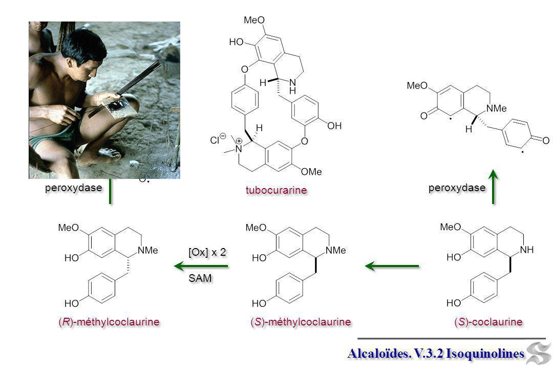 tubocurarine Alcaloïdes. V.3.2 Isoquinolines (S)-coclaurine (S)-méthylcoclaurine (R)-méthylcoclaurine [Ox] x 2 SAM [Ox] x 2 SAM peroxydase