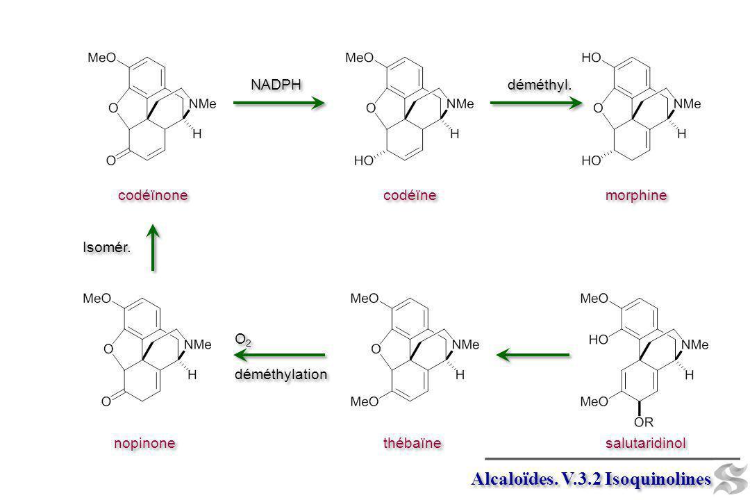 Alcaloïdes. V.3.2 Isoquinolines salutaridinol thébaïne O 2 déméthylation O 2 déméthylation nopinone Isomér. codéïnone codéïne NADPH morphine déméthyl.