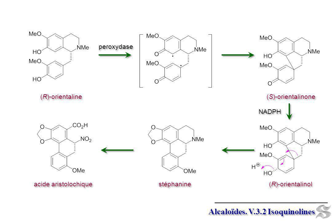Alcaloïdes. V.3.2 Isoquinolines (R)-orientaline peroxydase (S)-orientalinone stéphanine acide aristolochique NADPH (R)-orientalinol