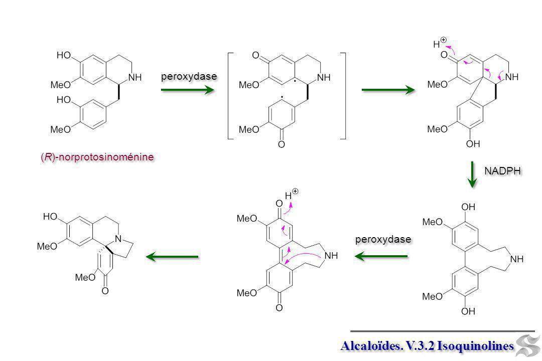 Alcaloïdes. V.3.2 Isoquinolines (R)-norprotosinoménine peroxydase NADPH peroxydase
