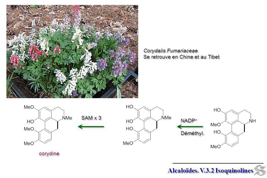 Alcaloïdes. V.3.2 Isoquinolines Corydalis Fumariaceae Se retrouve en Chine et au Tibet Corydalis Fumariaceae Se retrouve en Chine et au Tibet NADP + D