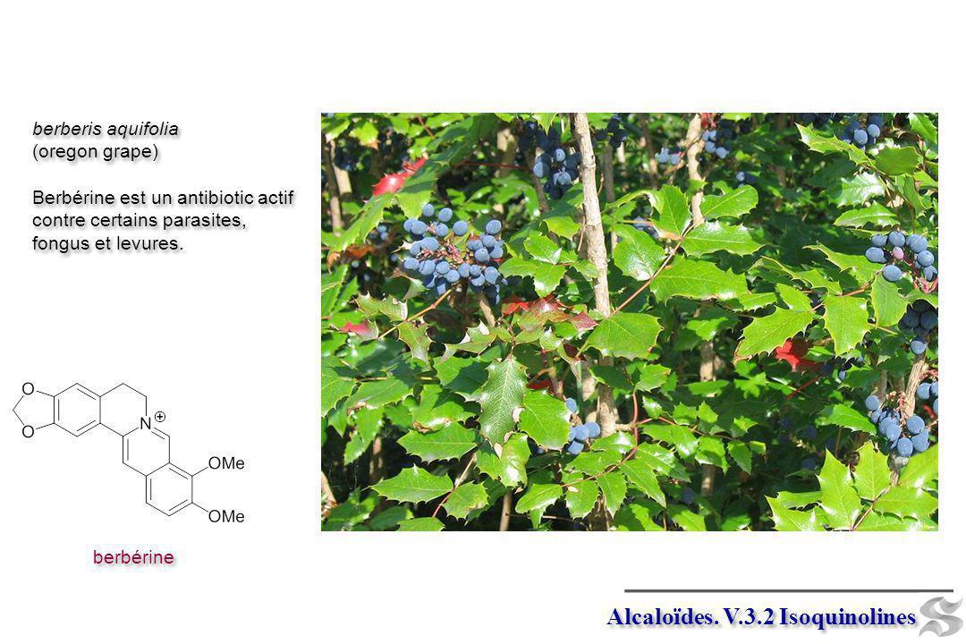 Alcaloïdes. V.3.2 Isoquinolines berbérine berberis aquifolia (oregon grape) Berbérine est un antibiotic actif contre certains parasites, fongus et lev