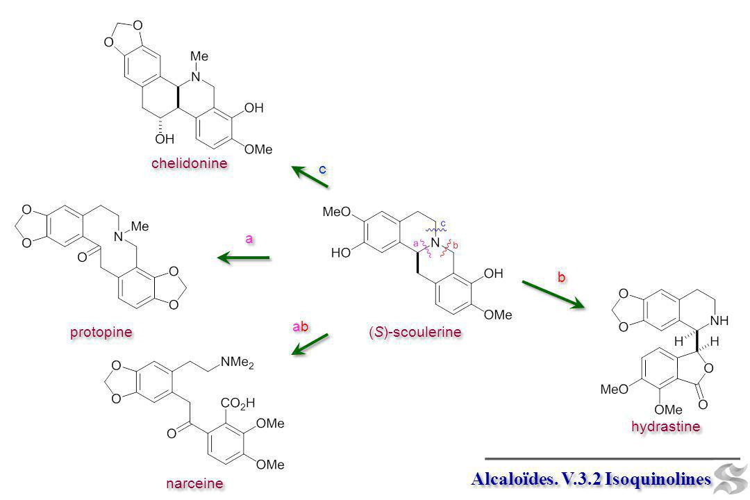Alcaloïdes. V.3.2 Isoquinolines (S)-scoulerine chelidonine protopine hydrastine narceine c c b b a a abab abab