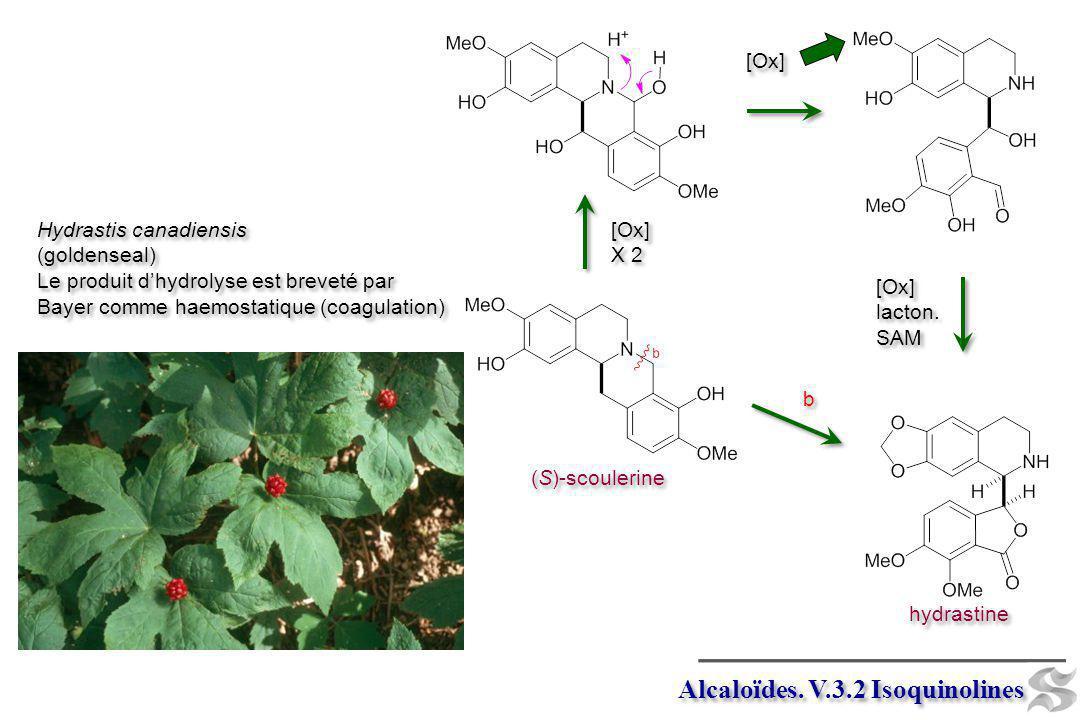 Alcaloïdes. V.3.2 Isoquinolines (S)-scoulerine [Ox] X 2 [Ox] X 2 hydrastine b b [Ox] lacton. SAM [Ox] lacton. SAM [Ox] Hydrastis canadiensis (goldense