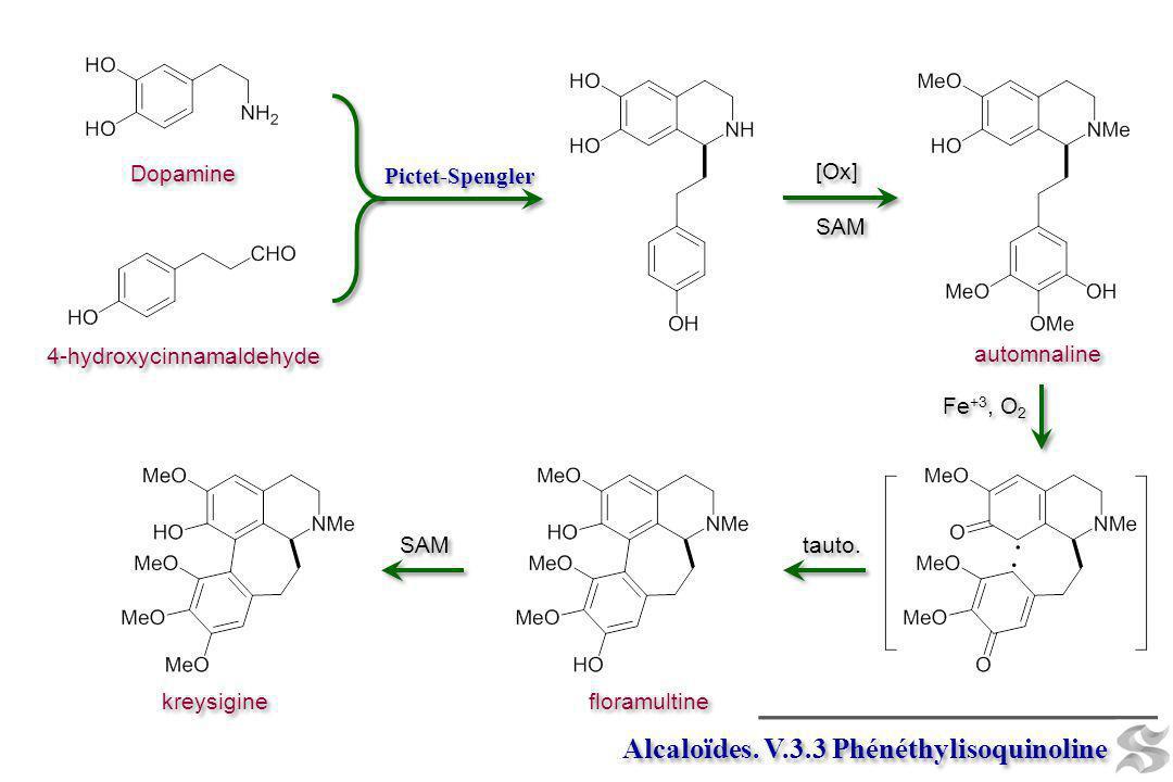 Alcaloïdes. V.3.3 Phénéthylisoquinoline Dopamine 4-hydroxycinnamaldehyde Pictet-Spengler Fe +3, O 2 [Ox] SAM [Ox] SAM automnaline kreysigine SAM flora