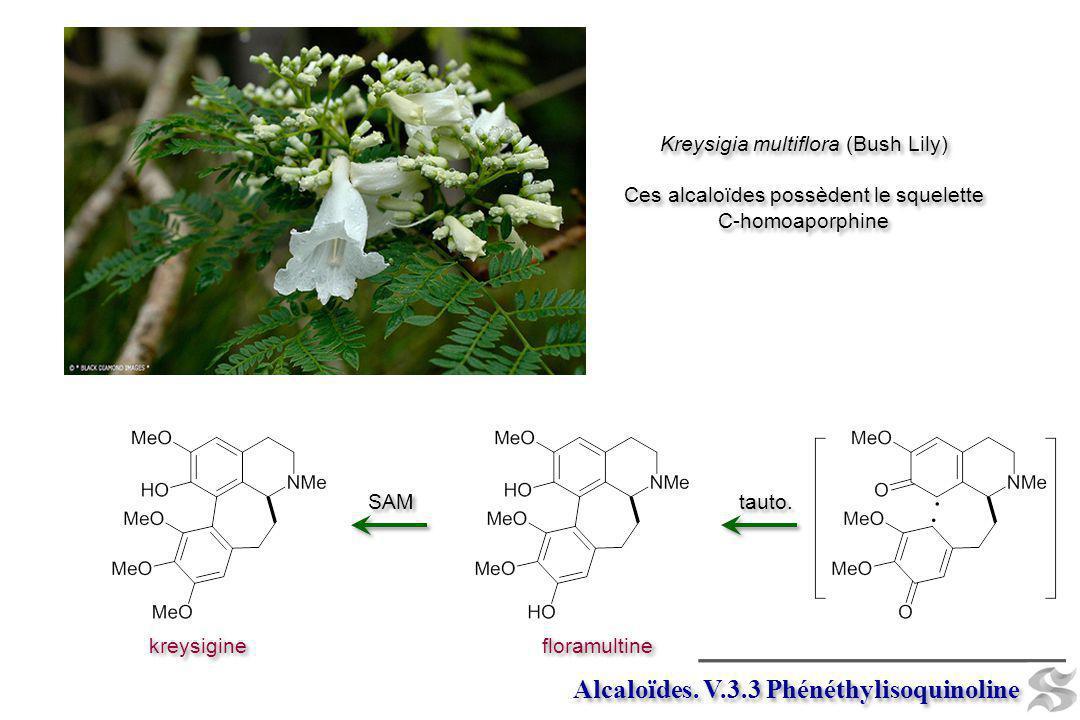 kreysigine SAM floramultine tauto. Alcaloïdes. V.3.3 Phénéthylisoquinoline Kreysigia multiflora (Bush Lily) Ces alcaloïdes possèdent le squelette C-ho