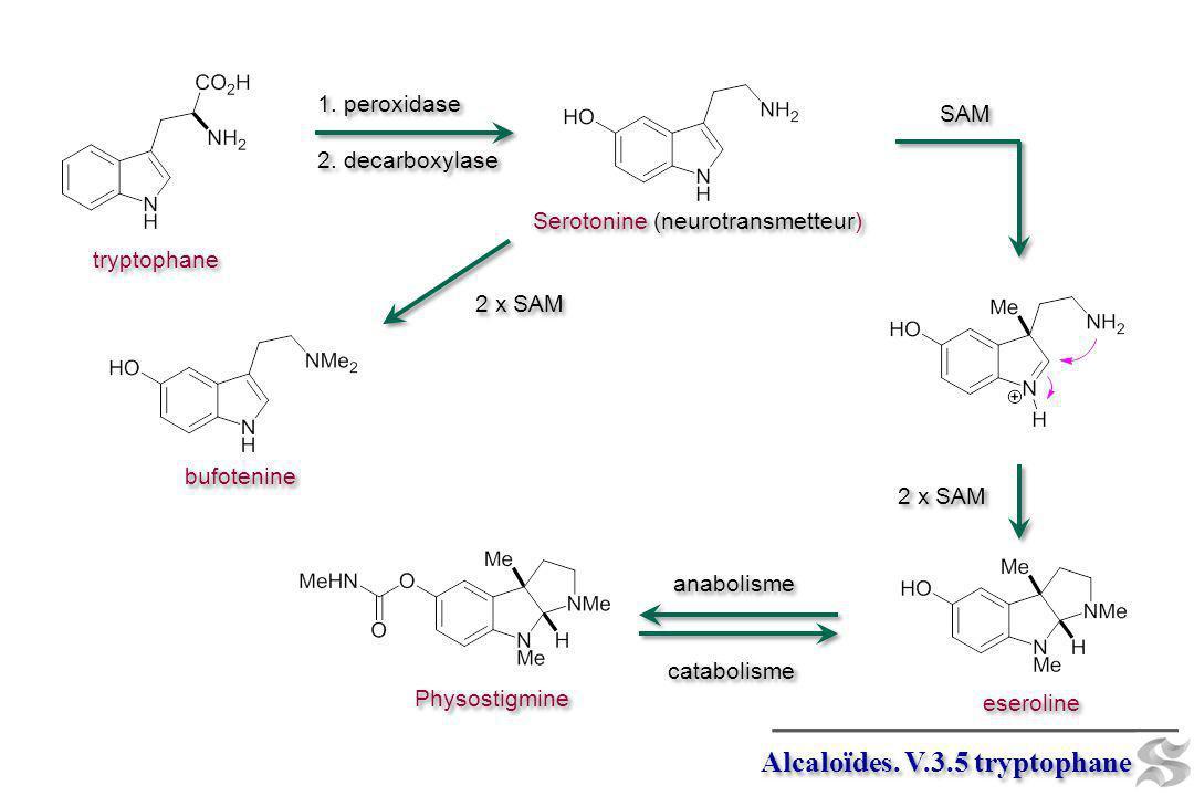 Alcaloïdes. V.3.5 tryptophane eseroline