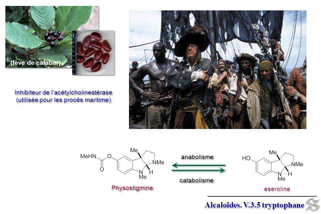 PLP (-CO 2 ) elaeagnine Harmine (drug yage) Harmine (drug yage) La drogue avait de supposés effets télépathiques et hallucinogènes.