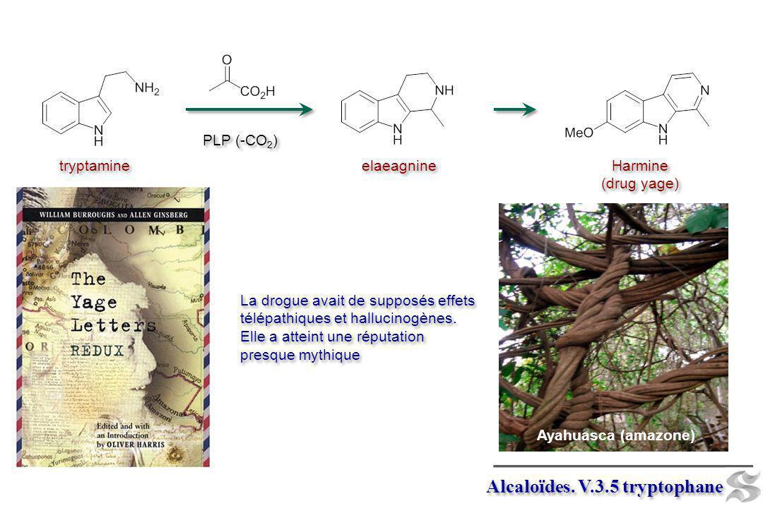 PLP (-CO 2 ) elaeagnine Harmine (drug yage) Harmine (drug yage) La drogue avait de supposés effets télépathiques et hallucinogènes. Elle a atteint une