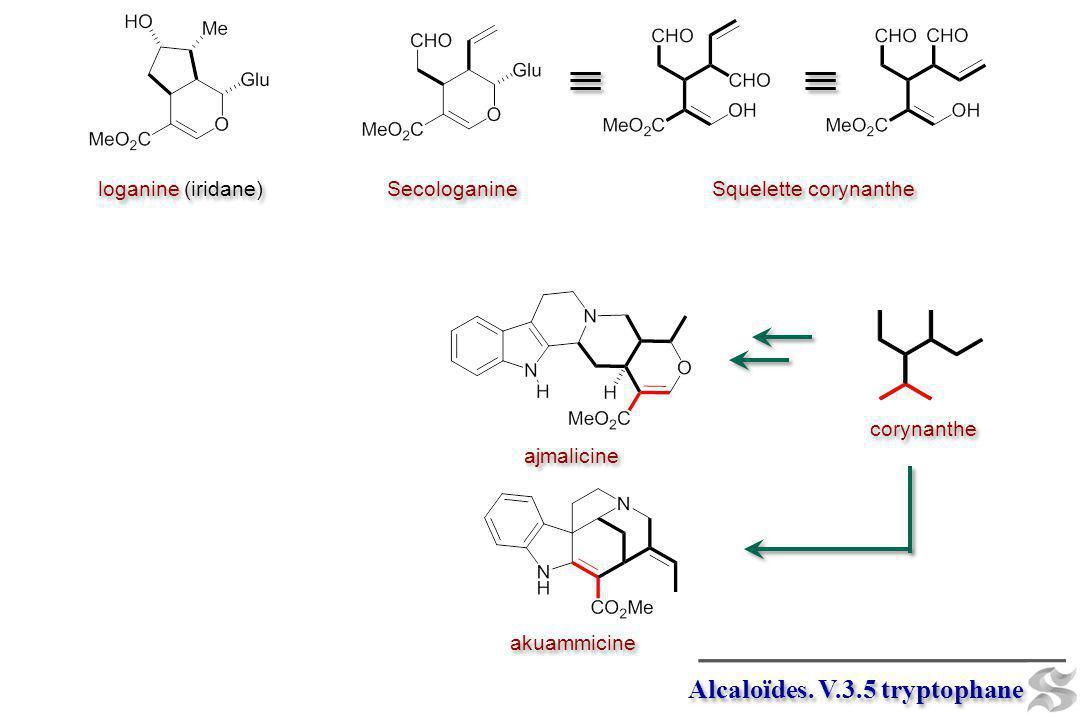 Alcaloïdes. V.3.5 tryptophane loganine (iridane) Secologanine Squelette corynanthe ajmalicine akuammicine corynanthe