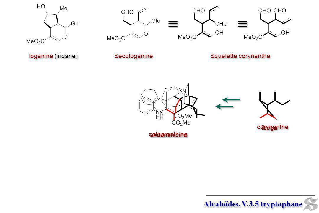 iboga Alcaloïdes. V.3.5 tryptophane loganine (iridane) Secologanine Squelette corynanthe akuammicine catharanthine corynanthe