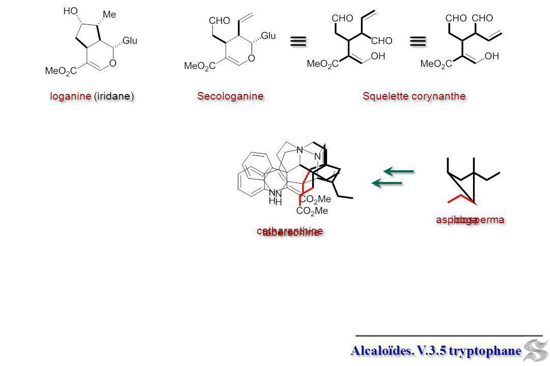 iboga catharanthine Alcaloïdes. V.3.5 tryptophane loganine (iridane) Secologanine Squelette corynanthe aspidosperma tabersonine