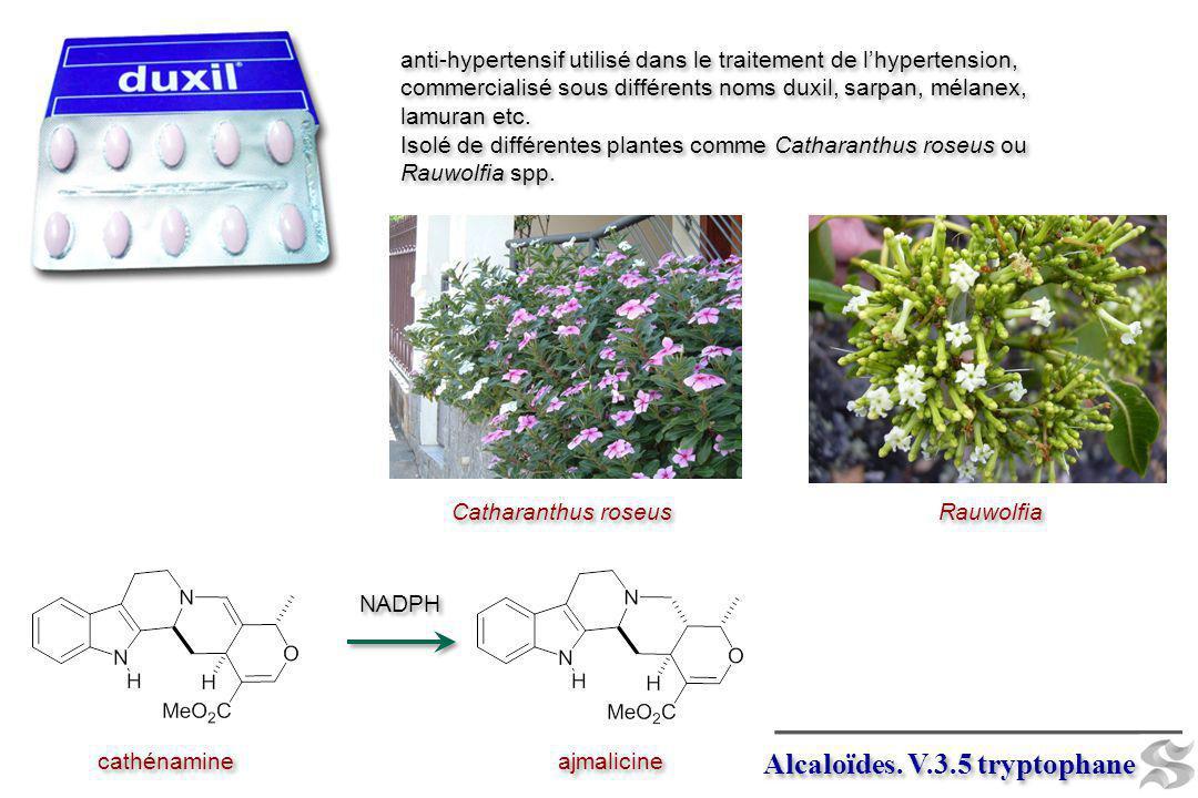 Alcaloïdes. V.3.5 tryptophane ajmalicine NADPH cathénamine anti-hypertensif utilisé dans le traitement de lhypertension, commercialisé sous différents