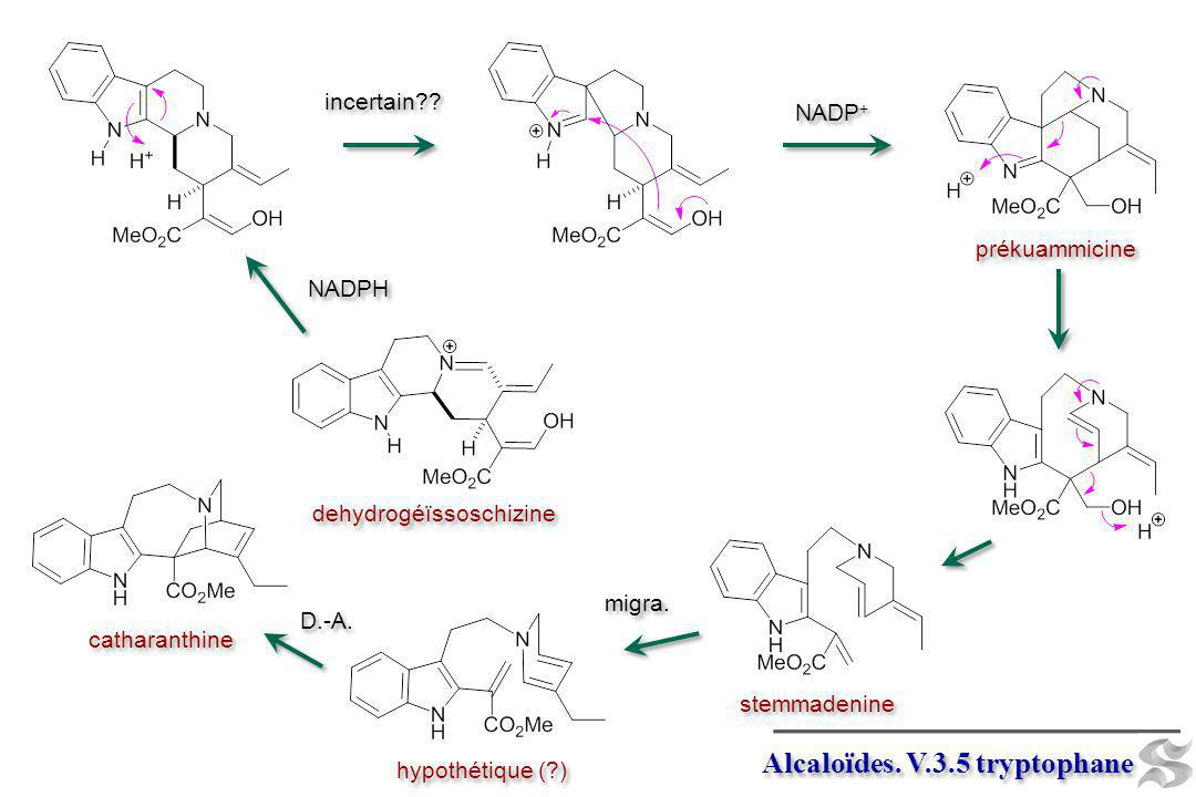 NADPH incertain?? NADP + prékuammicine stemmadenine catharanthine D.-A. migra. hypothétique (?) dehydrogéïssoschizine