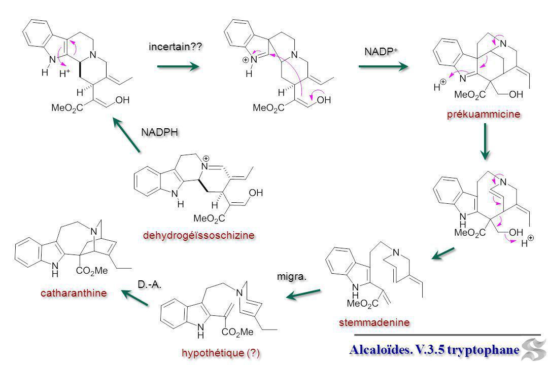 Alcaloïdes. V.3.5 tryptophane NADPH incertain?? NADP + prékuammicine stemmadenine catharanthine D.-A. migra. hypothétique (?) dehydrogéïssoschizine