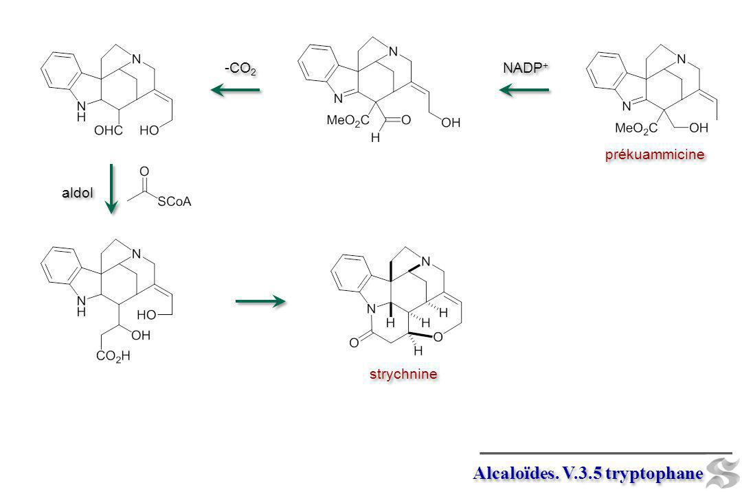 Alcaloïdes. V.3.5 tryptophane prékuammicine strychnine NADP + -CO 2 aldol