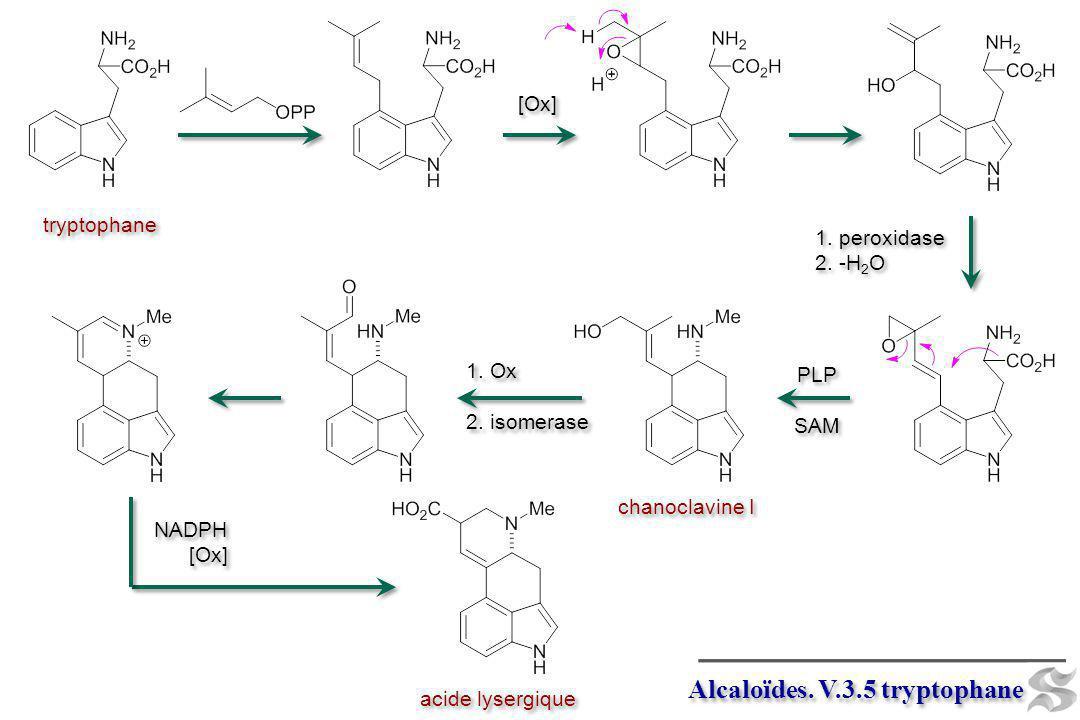 Alcaloïdes. V.3.5 tryptophane tryptophane chanoclavine I PLP SAM PLP SAM acide lysergique [Ox] 1. peroxidase 2. -H 2 O 1. peroxidase 2. -H 2 O 1. Ox 2
